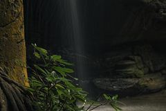 Serenity Falls in Buderim. Serenity Falls in Buderim, Sunshine Coast, Australia. Located in the Buderim Forest waterfall walk Stock Images