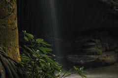 Serenity Falls in Buderim. Stock Images