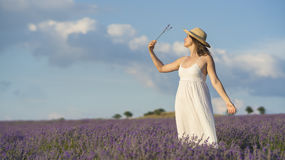 Serenity and lavender Stock Photography