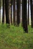Seres del bosque muchos cosa imagen de archivo