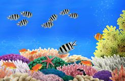 Sea life at a colorful coral reef Royalty Free Stock Images