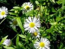Seria Dziki kwiat Zdjęcie Stock