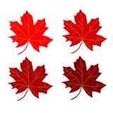 Seria liścia klonowego czerwień Zdjęcia Stock