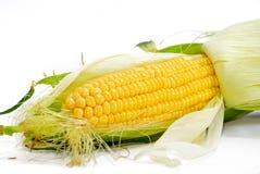 Serie 01 del maíz Imagen de archivo libre de regalías