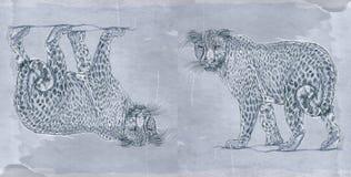 Serie animale realistica per le insegne, una pantera Fotografia Stock