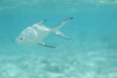 Serie av fiskar Arkivfoton
