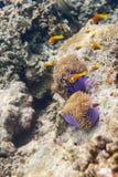 Serie av fiskar Arkivfoto