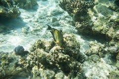 Serie av fiskar Arkivbilder