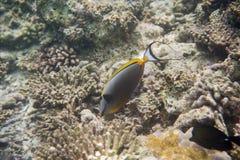 Serie av fiskar Royaltyfria Foton