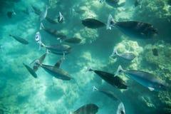 Serie av fiskar Royaltyfri Foto