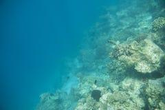 Serie av fiskar Royaltyfria Bilder