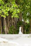 Serie av Maldiverna Arkivfoton