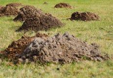 Serie av mullvadshögar på en greenfieldplats i bergen Arkivbild