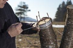 SERIE DE FOTOS que injertan el árbol frutal Foto de archivo libre de regalías