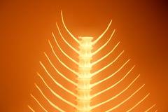 Serie de la espina de pez imágenes de archivo libres de regalías