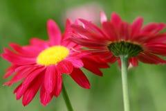 Serie de la flor Imagenes de archivo