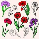 Serie de la ilustración de la flor Fotos de archivo libres de regalías