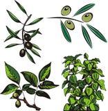 Serie de la ilustración de la fruta Imagen de archivo