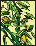 Serie de la ilustración de la fruta Fotografía de archivo
