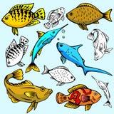 Serie de la ilustración de Seaworld Imágenes de archivo libres de regalías