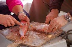 Serie de la pesca - limpieza de un pescado fresco Imagen de archivo libre de regalías