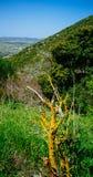 Serie de la Tierra Santa - Galilea superior - Ein Yorkat 2 foto de archivo