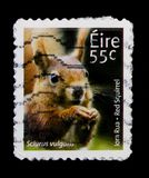 Serie degli animali e di Marine Life terzo di serie vulgaris e irlandese dello Sciurus dello scoiattolo rosso, circa 2011 Immagine Stock