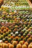 Serie del cactus Immagine Stock