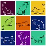 Serie del gato Fotos de archivo libres de regalías