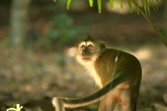 Serie del mono Imágenes de archivo libres de regalías