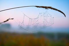 Serie del web nella mattina nebbiosa di autunno Fotografie Stock