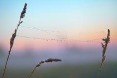 Serie del web nella mattina nebbiosa di autunno Immagine Stock