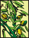 Serie dell'illustrazione della frutta Fotografia Stock