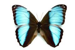 Serie della farfalla - bella farfalla rara Immagini Stock