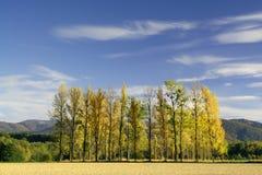 Serie della foresta immagine stock
