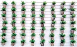 Serie della pianta sulla parete bianca Fotografie Stock Libere da Diritti