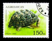 Serie della tartaruga (pardalis del testudo), delle tartarughe e delle tartarughe del leopardo Fotografia Stock