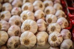 Serie di lampadine dell'aglio fotografia stock