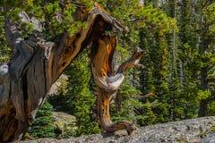 Serie di legno stagionata - 1 Fotografia Stock Libera da Diritti