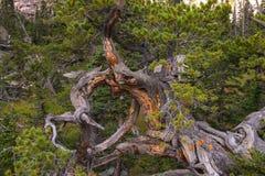 Serie di legno stagionata - 3 Fotografie Stock