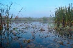 Serie di mattina nebbiosa di autunno dei paesaggi Fotografie Stock Libere da Diritti