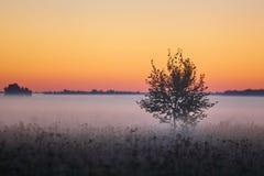 Serie di mattina nebbiosa di autunno dei paesaggi fotografia stock
