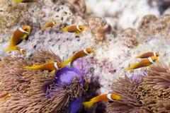 Serie di pesci Fotografie Stock Libere da Diritti