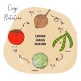 Serie di rotazione delle colture di vettore di schizzo di tiraggio della mano illustrazione di stock