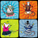 Serie divertida 1 de las ratas Foto de archivo libre de regalías