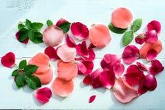 serie för blom- petals för bakgrund rose Arkivfoto