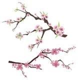 Serie floral de la ramificación Foto de archivo libre de regalías