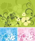Serie floral del fondo Fotografía de archivo libre de regalías