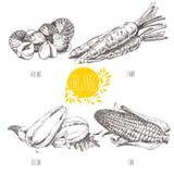 Serie - frukt, grönsaker och kryddor Serie - frukt, grönsaker och kryddor Hand-dragen illustration i tappningstyl Arkivbild
