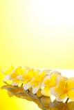 Serie gelbe Leelawadee Blumen Stockfotografie